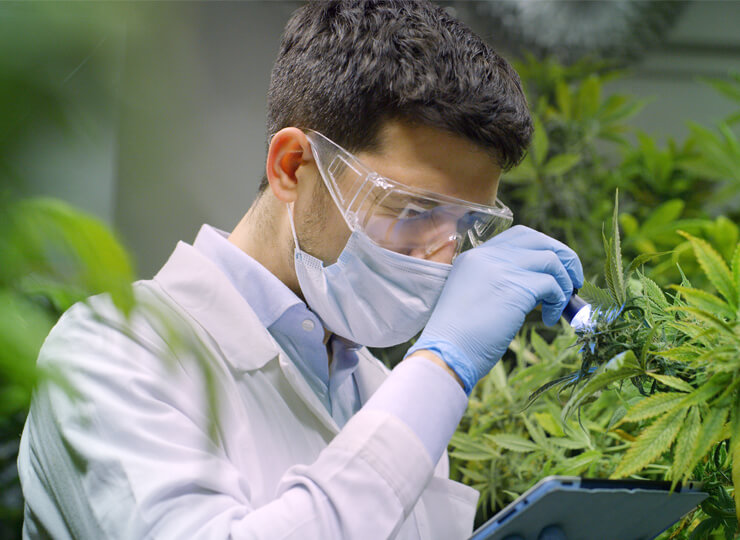 US Congress considers CBD research