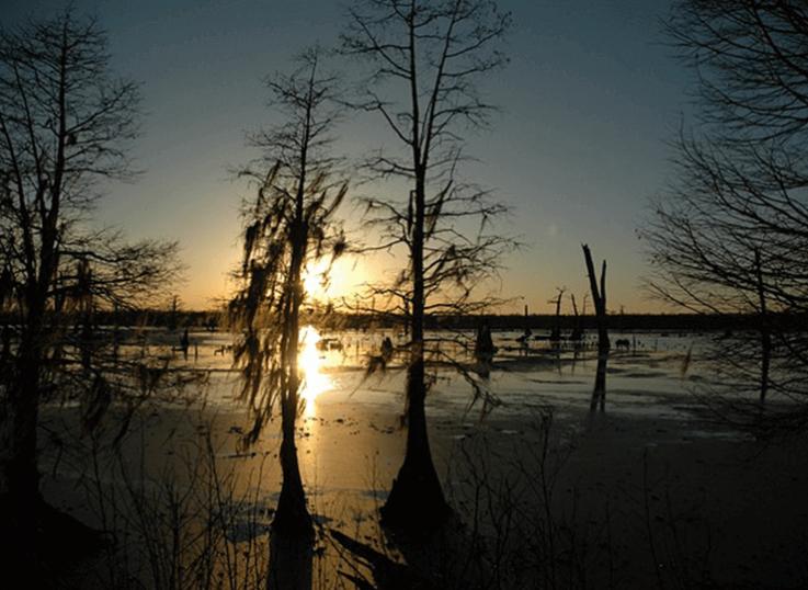 CBD oil Louisiana