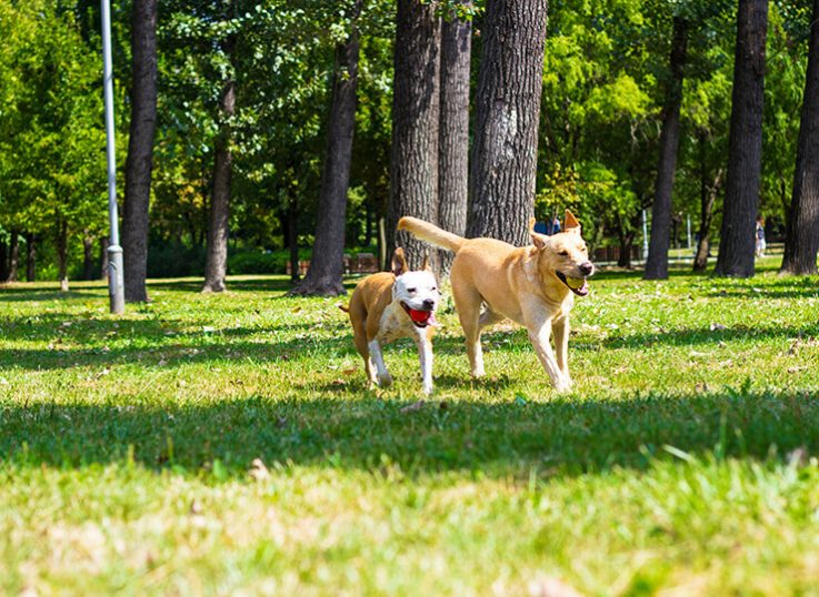 Is CBD oil for dogs safe?