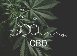 What is CBD oil, hemp oil, and more
