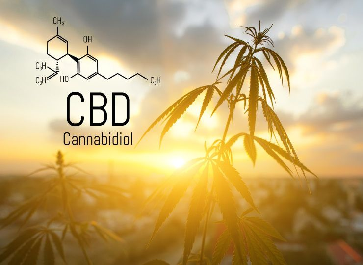 What is CBD oil used for during the day